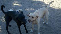 Kona and Cody2